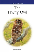 Enter the Realm of the Golden Eagle