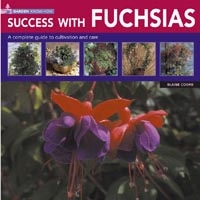 Success With Fuchsias