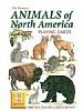 Nord-Amerikanske dyr - Animals of North America